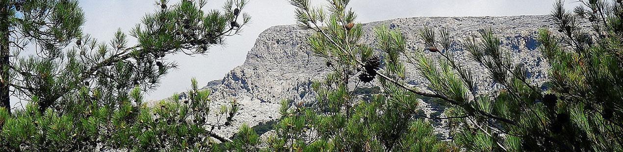 Selacano Forest at Crete